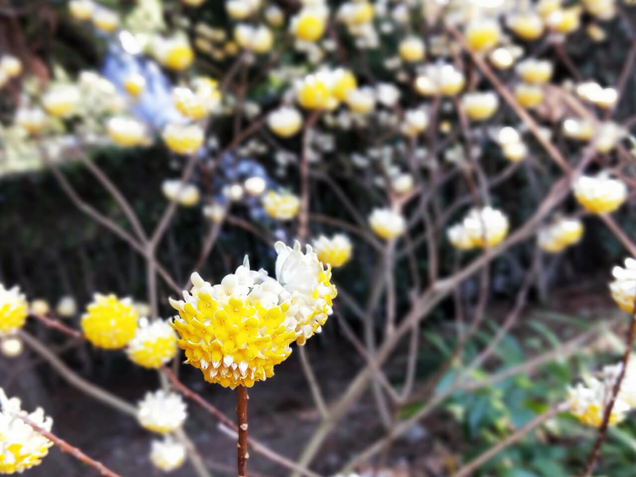 R11sで撮影した花の写真。ボケ方がまるで一眼レフ!流石F1.7のレンズ!
