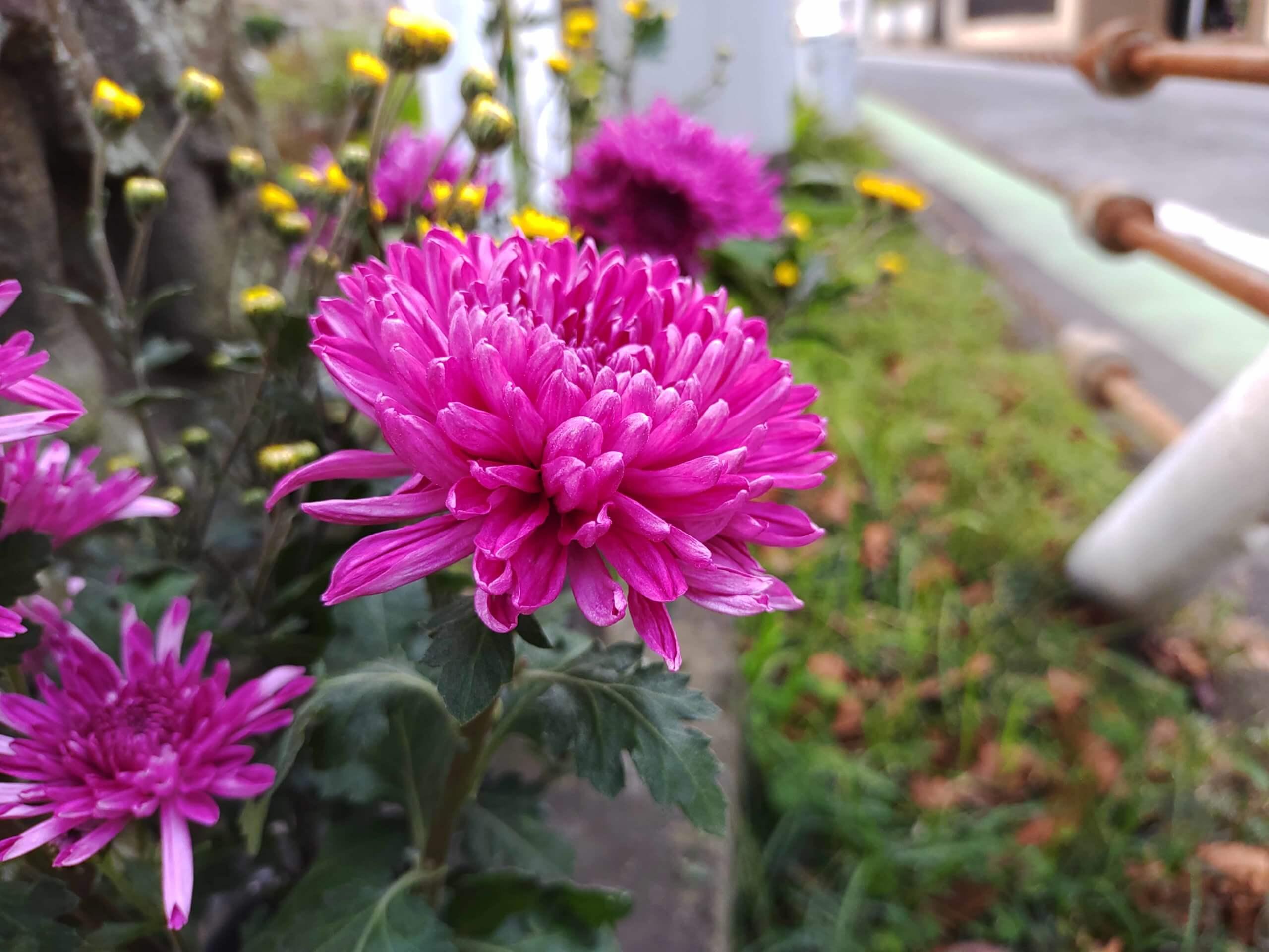 Rakuten Handで撮影した花の写真