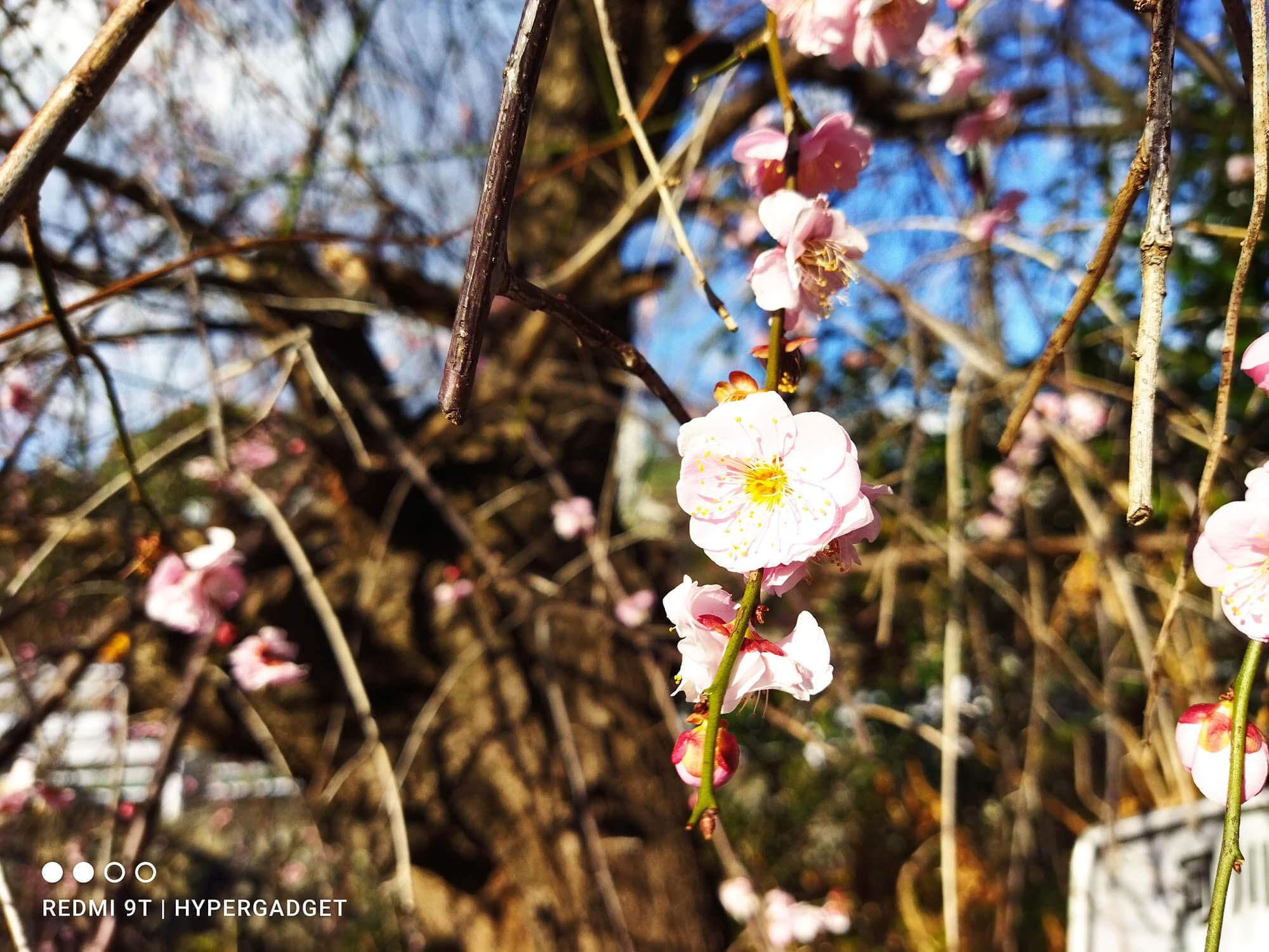 Xiaomiのデフォルトカメラアプリは花びらが白飛び