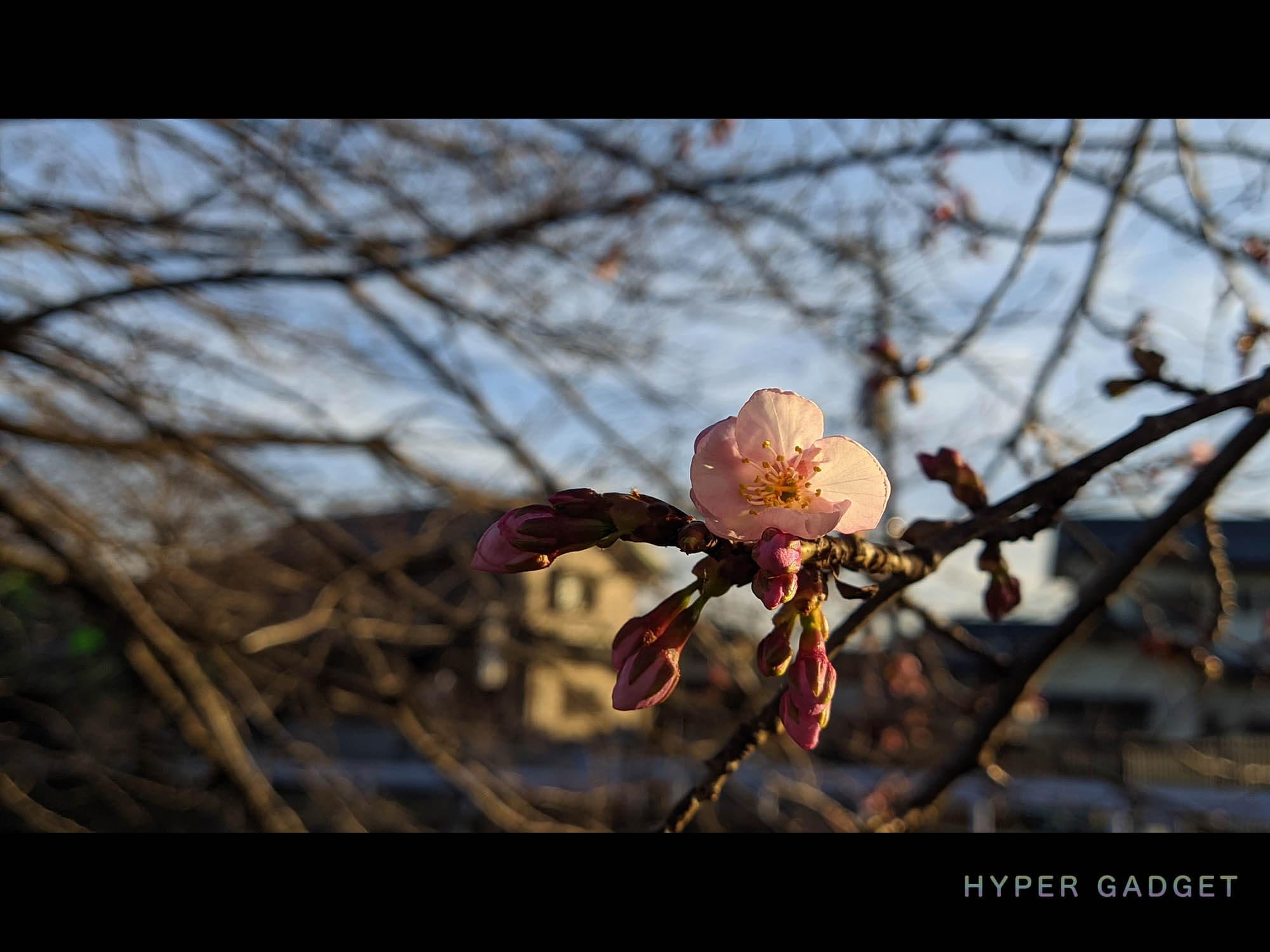 Xiaomi Redmi 9TにGCamを入れて撮影した夕暮れの梅の花