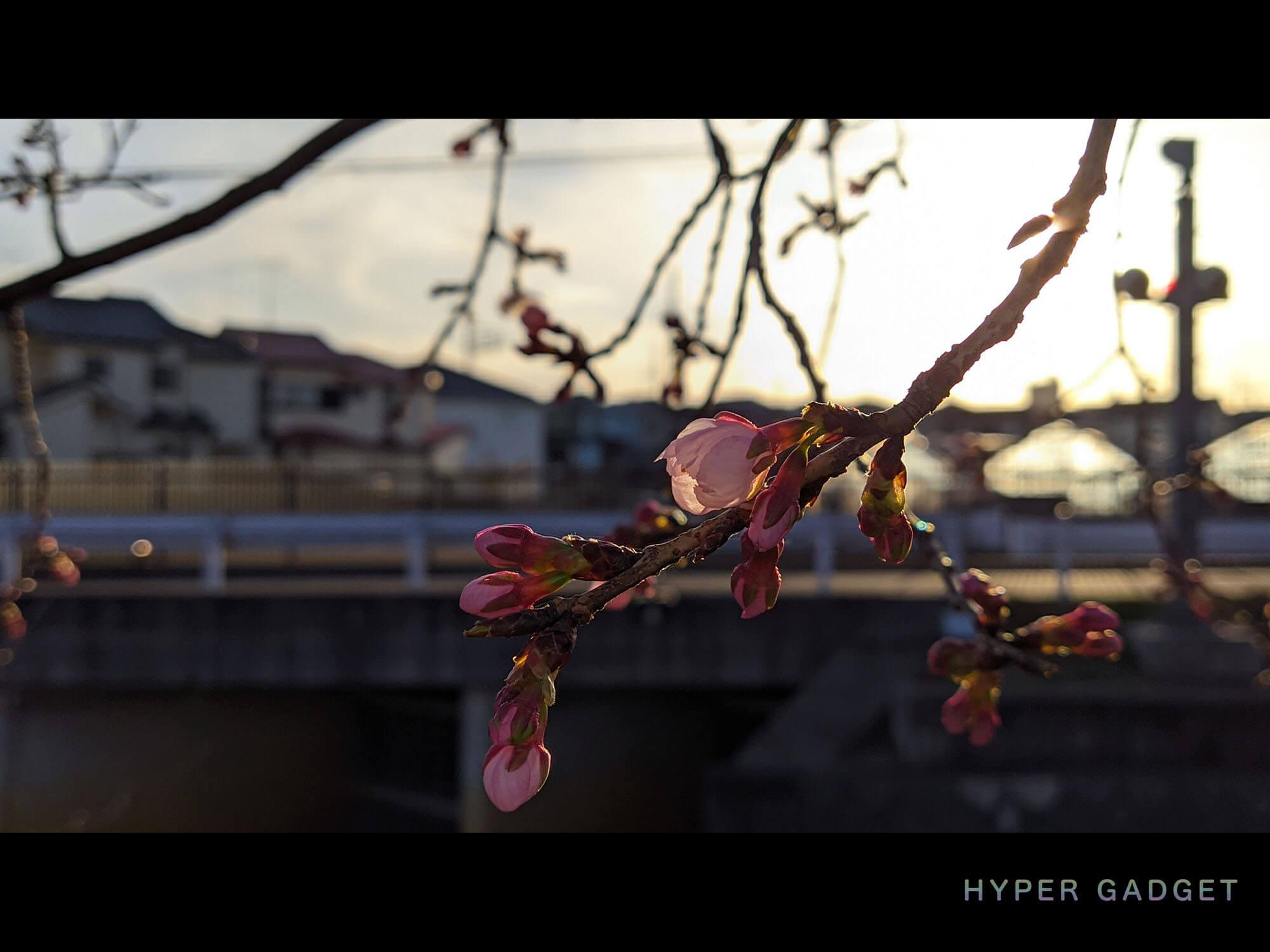 Xiaomi Redmi 9TにGCamを入れて撮影した夕方の咲きかけの梅