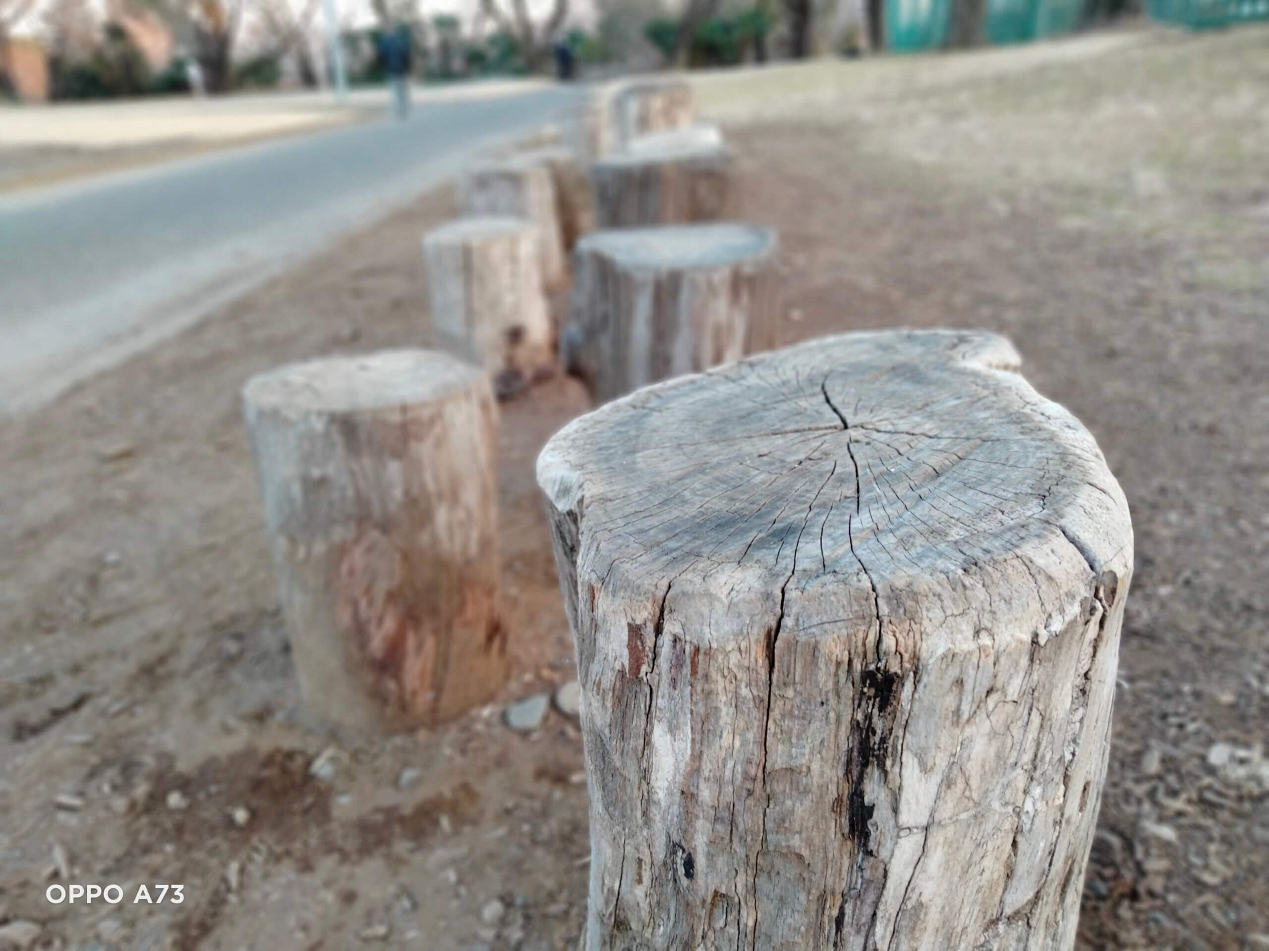 OPPO A73のポートレートモードで撮影木の丸太を撮影