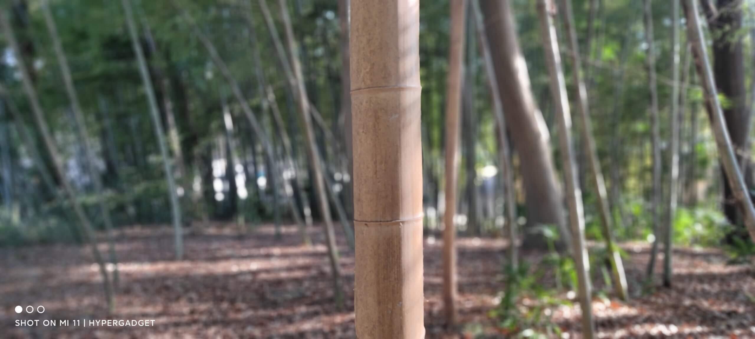 Xiaomi Mi 11で撮影した竹林の写真