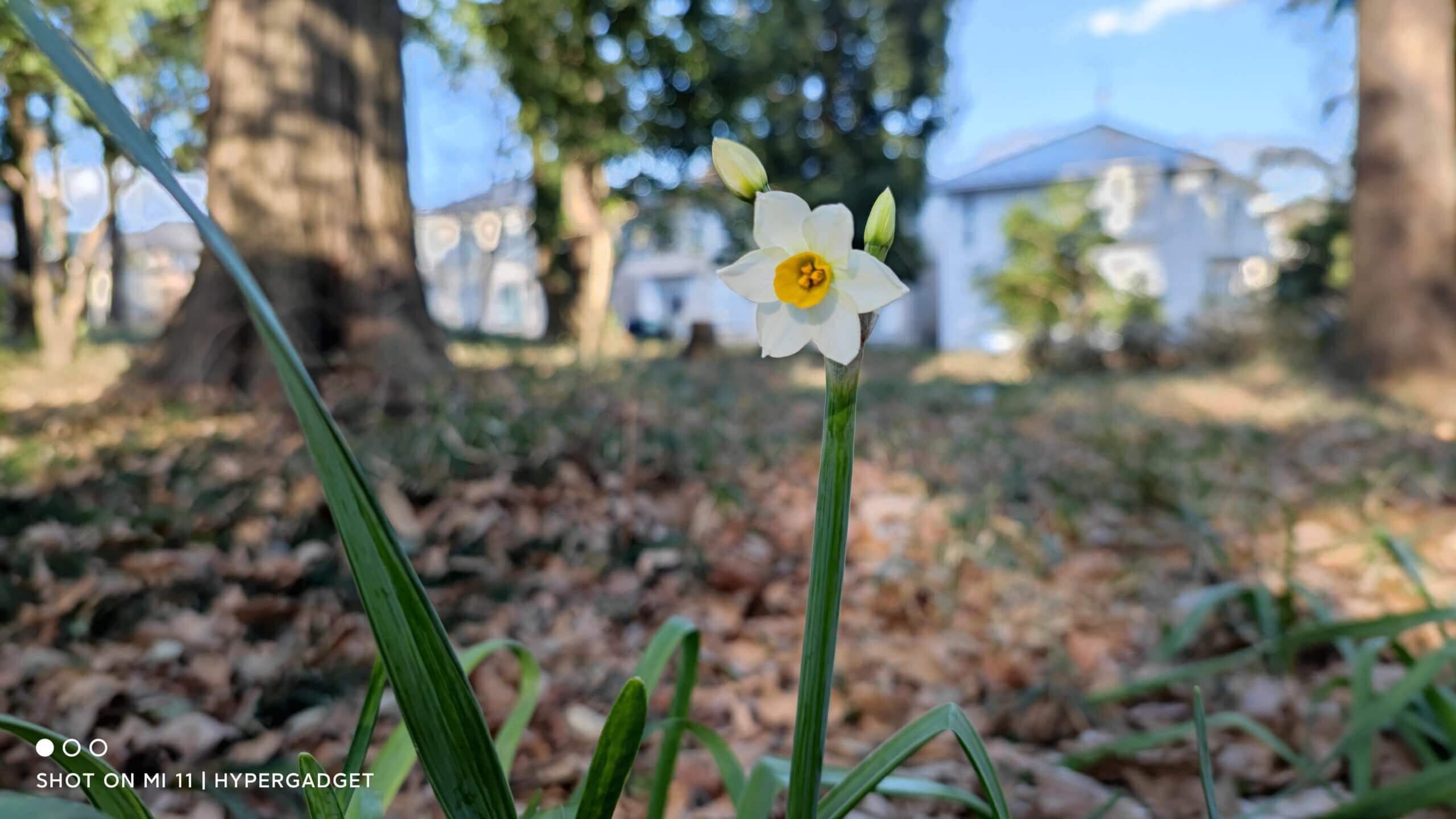 Xiaomi Mi 11で撮影した花の写真