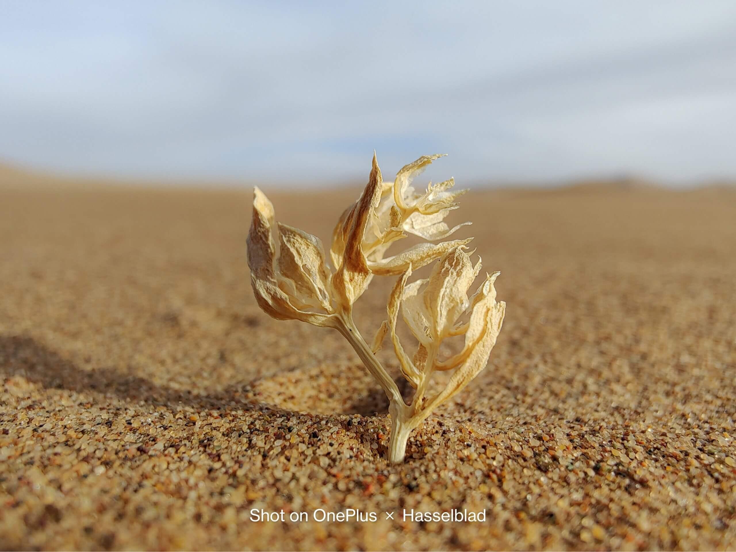 OnePlus 9シリーズで撮影した砂漠の写真