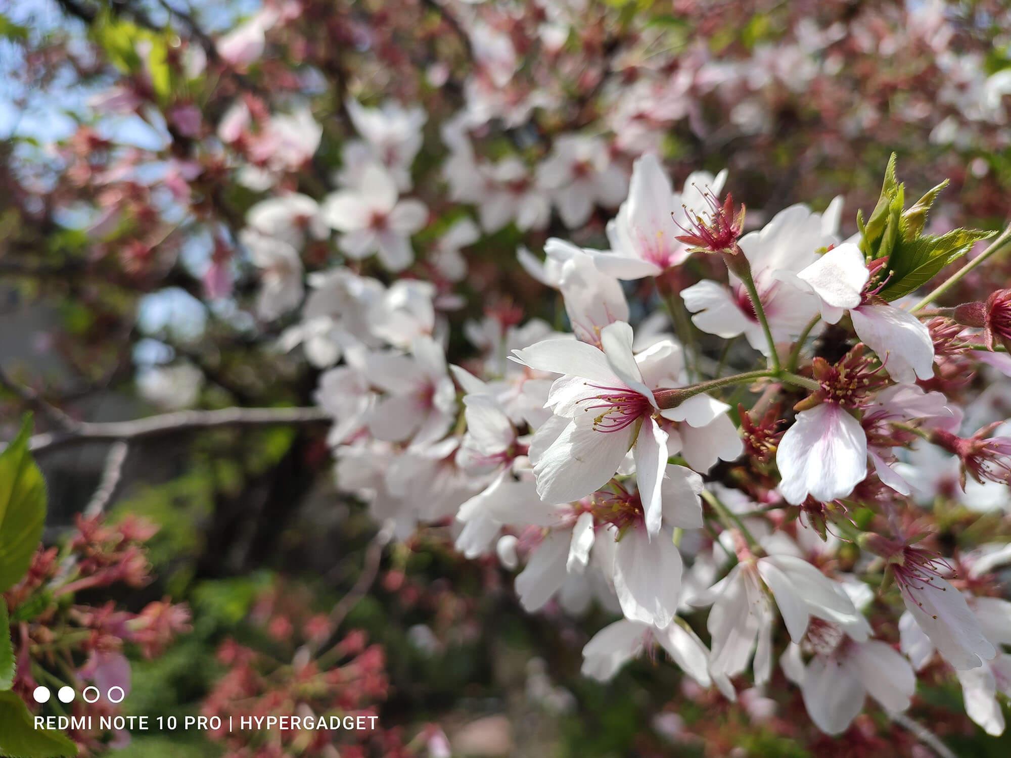 Redmi Note 10 Proで撮影した桜の画像