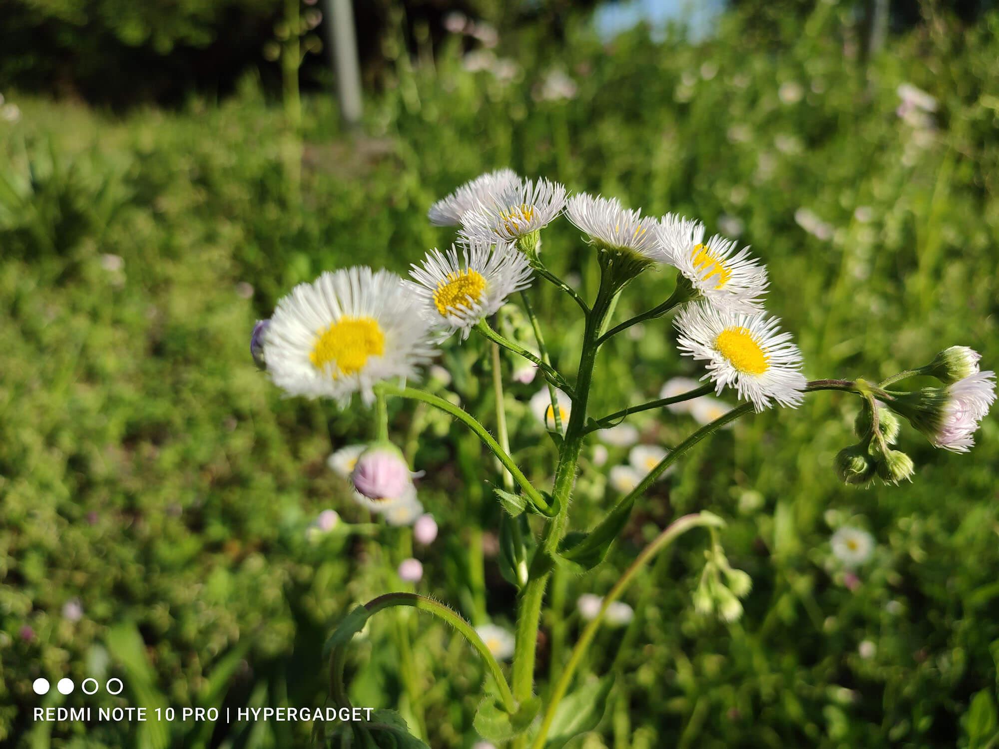 Redmi Note 10 Proで撮影した白い花の写真