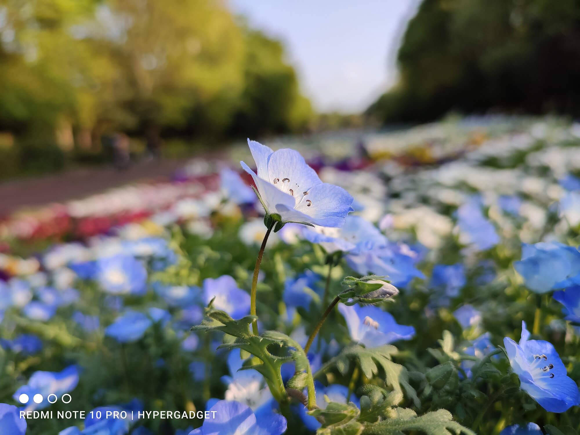 Redmi Note 10 Proのメインカメラで撮影した青い花の画像