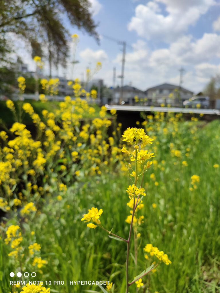 Redmi Note 10 Proのメインカメラで撮影した菜の花の青空の風景