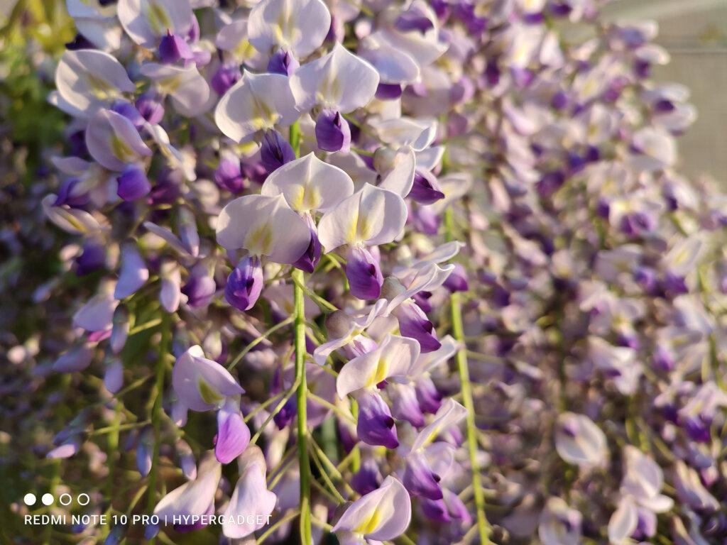 Redmi Note 10 Proで撮影した藤蔓の花