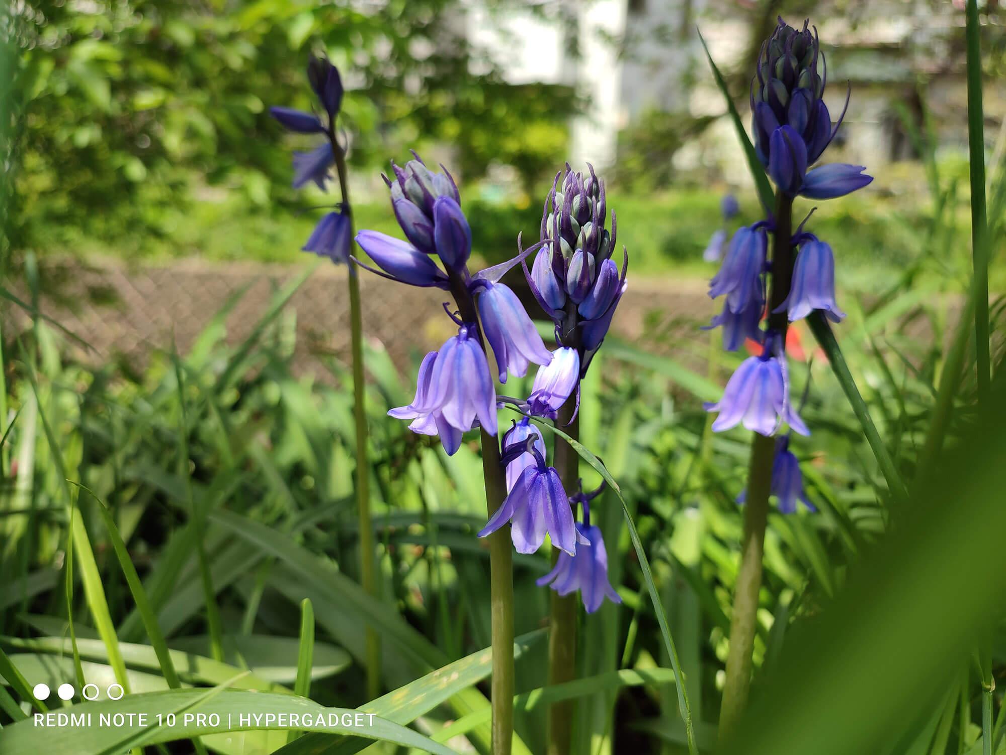 Redmi Note 10 Proのメインカメラで撮影した紫色の花の写真