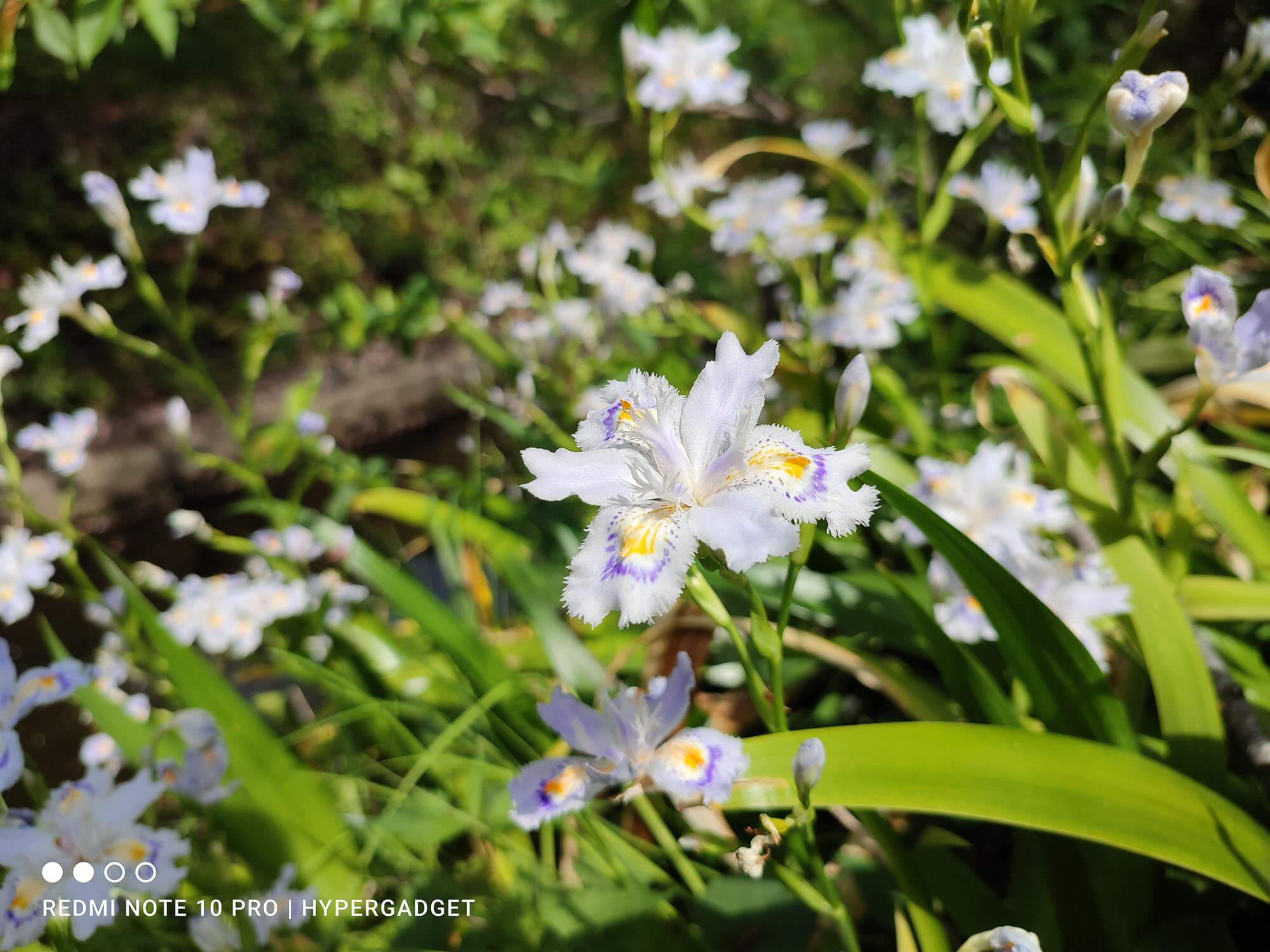 Redmi Note 10 Proで撮影した白紫の花の画像