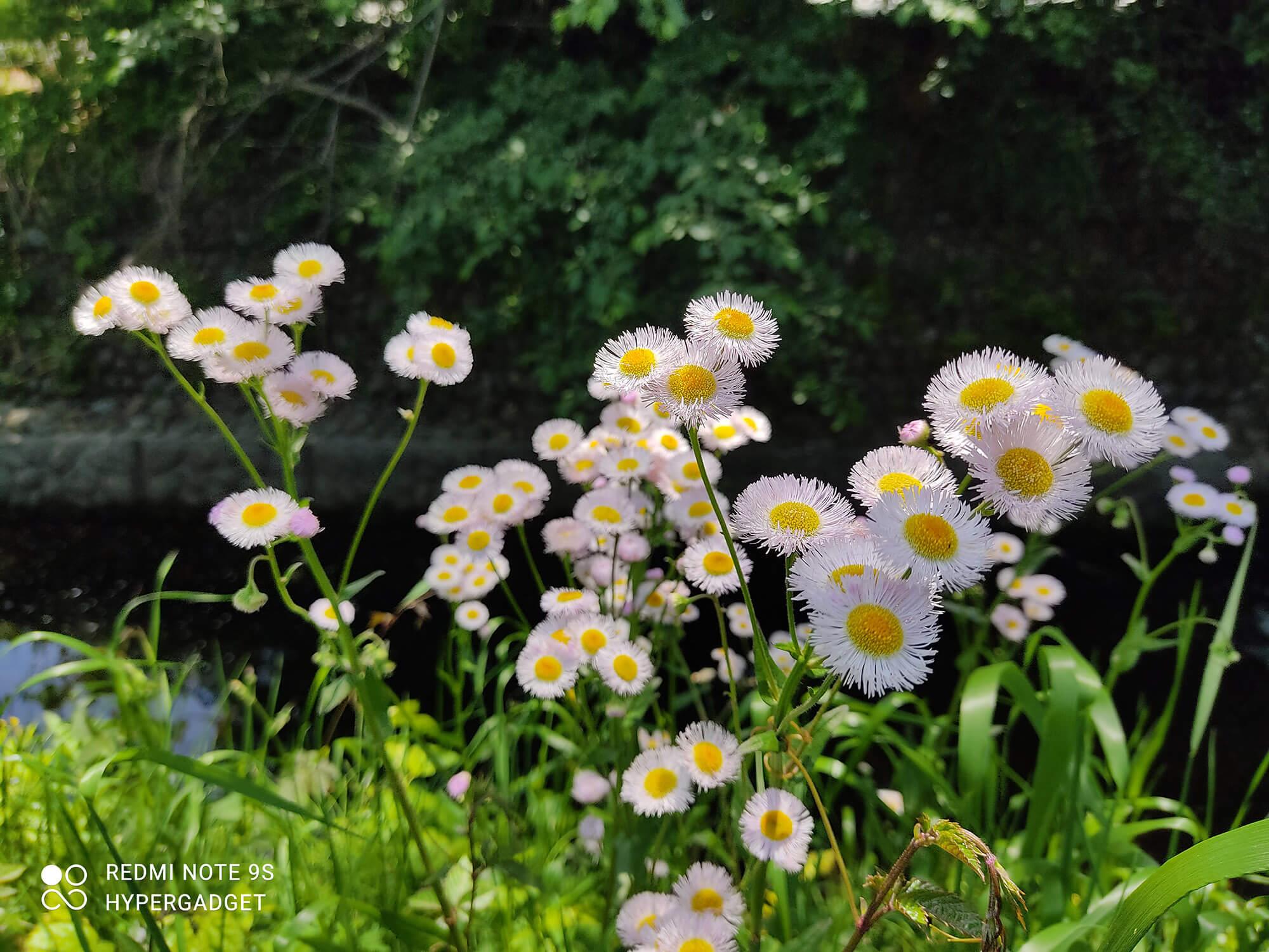 Redmi Note 9Sで撮影した白い花