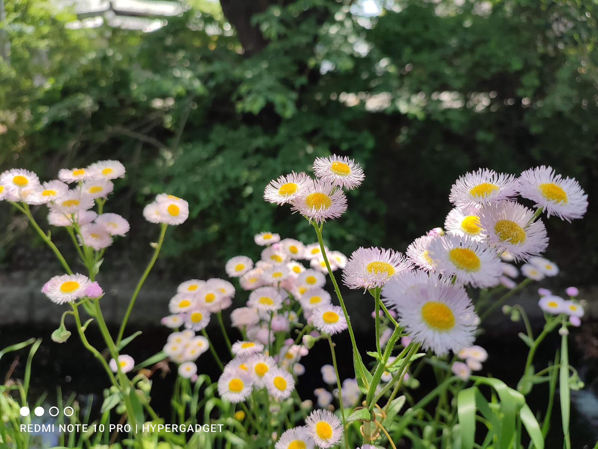 Redmi Note 10 Proで撮影した白い花
