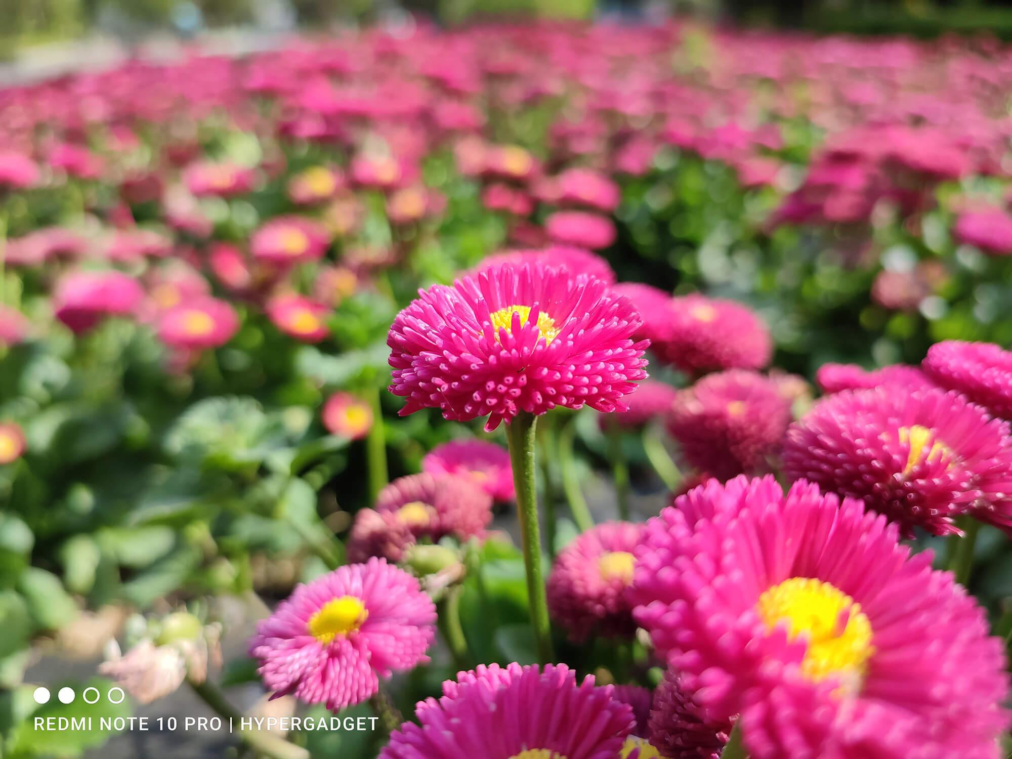 Redmi Note 10 Proで撮影したピンクの花の写真