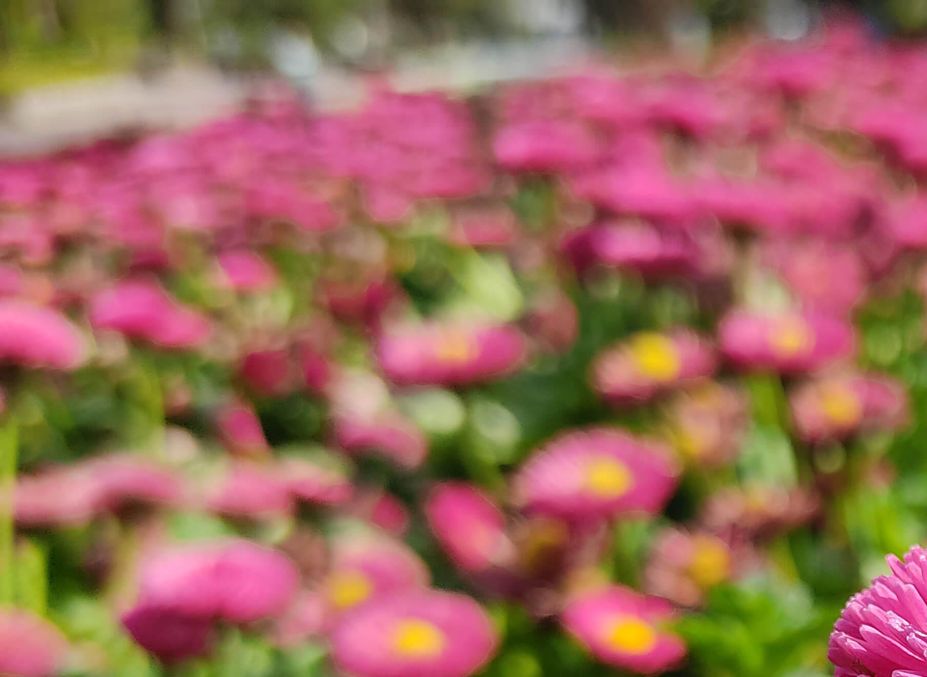 Redmi Note 9Sで撮影したピンクの花の画像を拡大