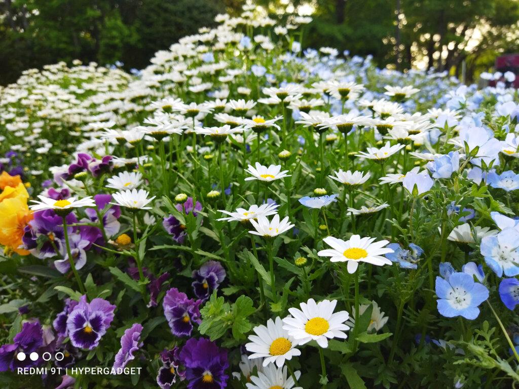 Redmi 9Tで撮影した沢山の花の写真