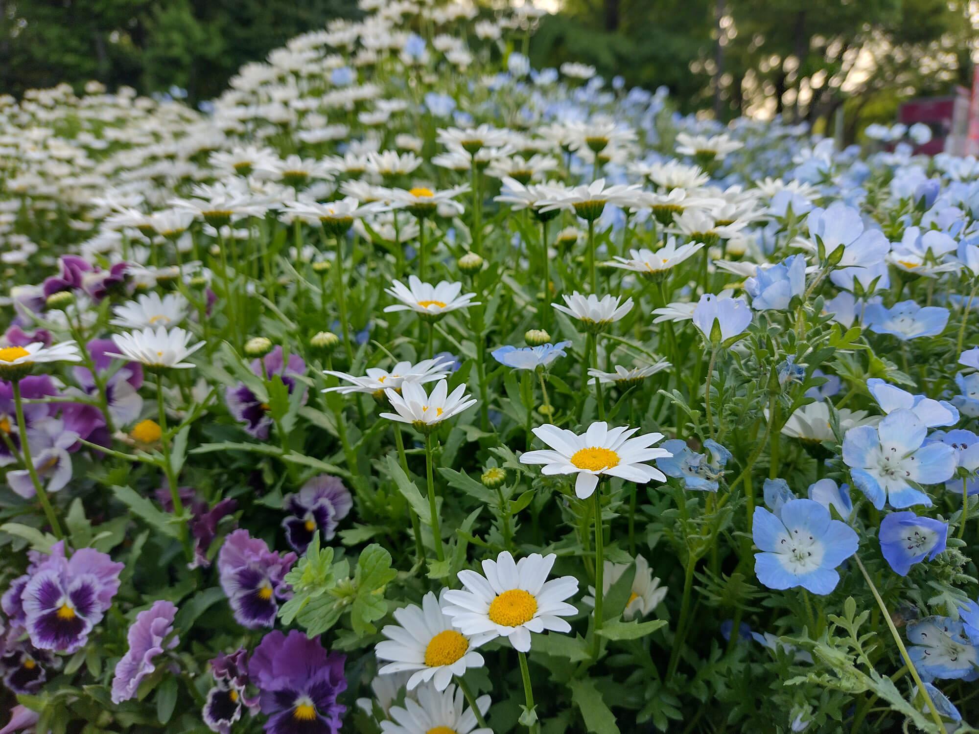 moto g30で撮影した沢山の花の写真
