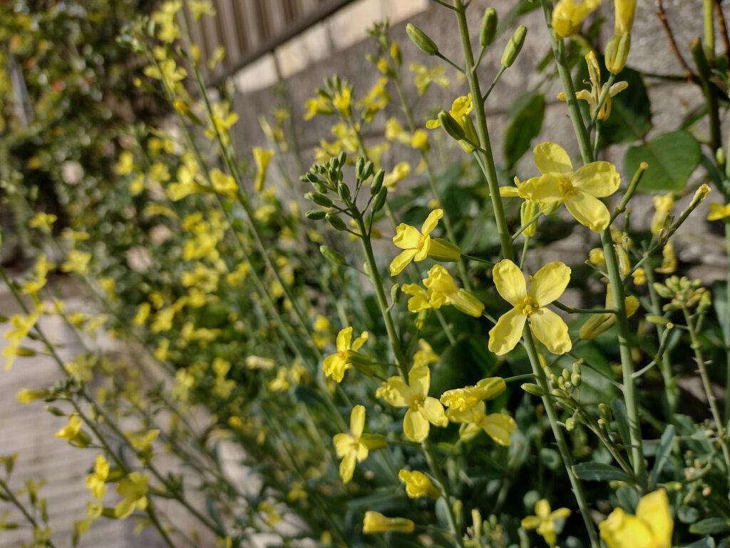 moto g30のカメラで撮影した黄色い花