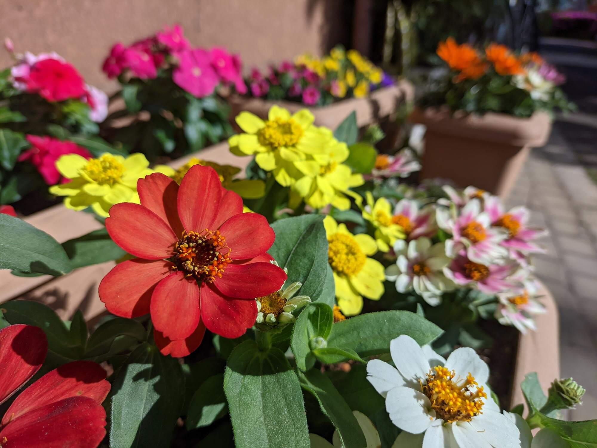 moto g30で撮影した色とりどりの花