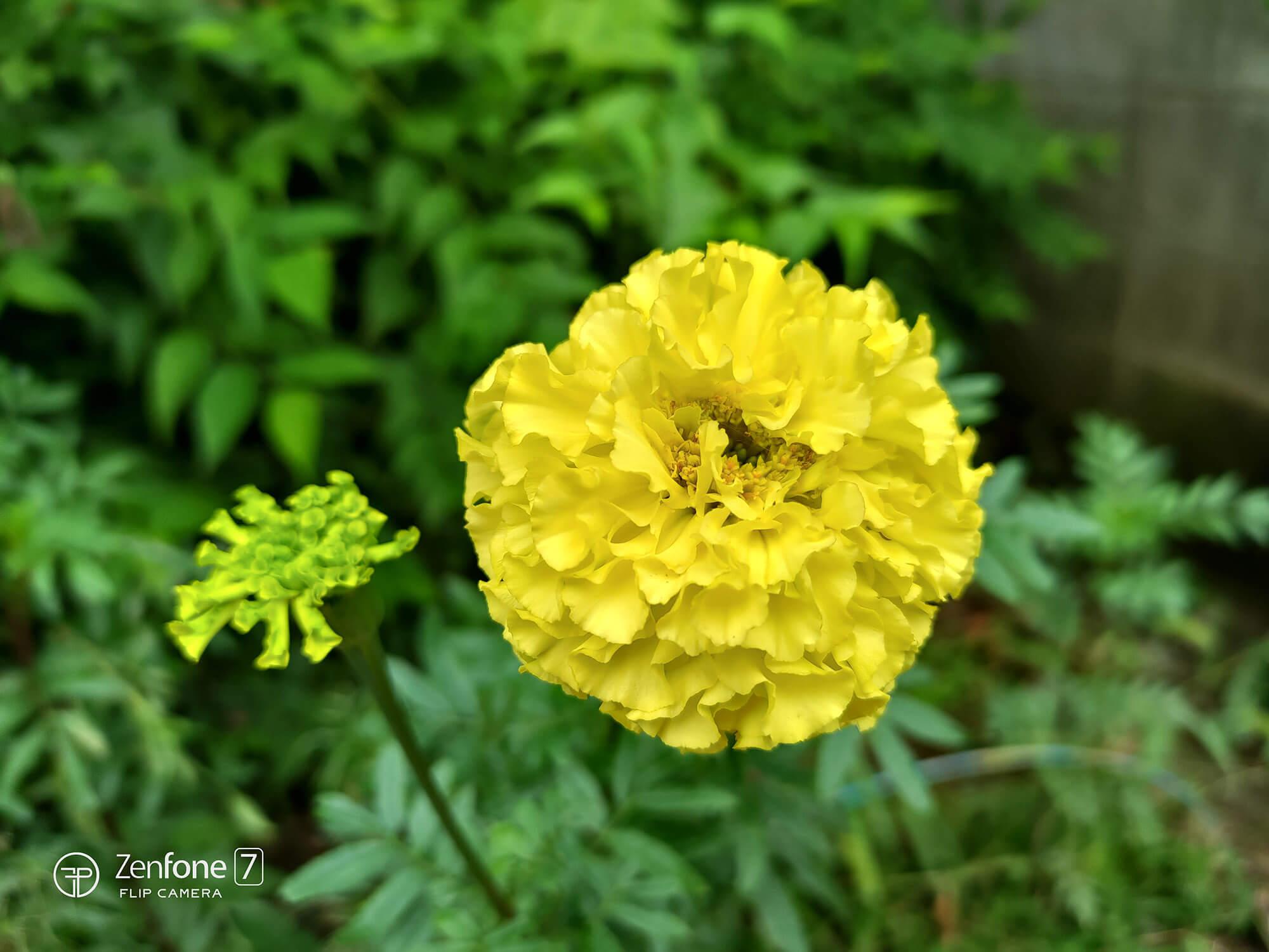 適正露出の黄色い花